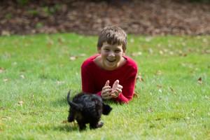 cavalier puppy 9 weeks-3
