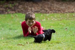 cavalier puppy 9 weeks-4