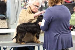 sirius dog show 2