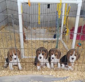 mias pups 8 weeks 2