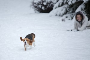 beagle snow day-15